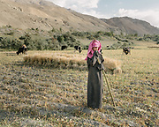 Girl taking care of the family herd.  The traditional life of the Wakhi people, in the Wakhan corridor, amongst the Pamir mountains.