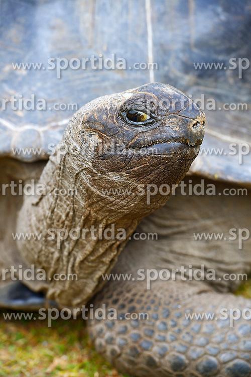 23.07.2015, Insel Curieuse, SYC, auf den Seychellen, im Bild Aldabra-Riesenschildkroeten (Geochelone gigantea), endemisch // Holiday on the Seychelles at the Insel Curieuse, Seychelles on 2015/07/23. EXPA Pictures © 2015, PhotoCredit: EXPA/ Eibner-Pressefoto/ Schulz<br /> <br /> *****ATTENTION - OUT of GER*****
