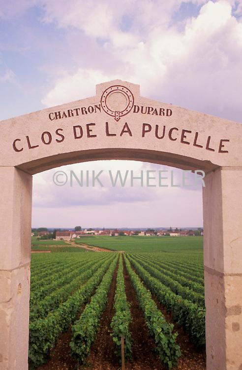 Stone arch gateway into vineyard in Puligny Montrachet Burgundy France