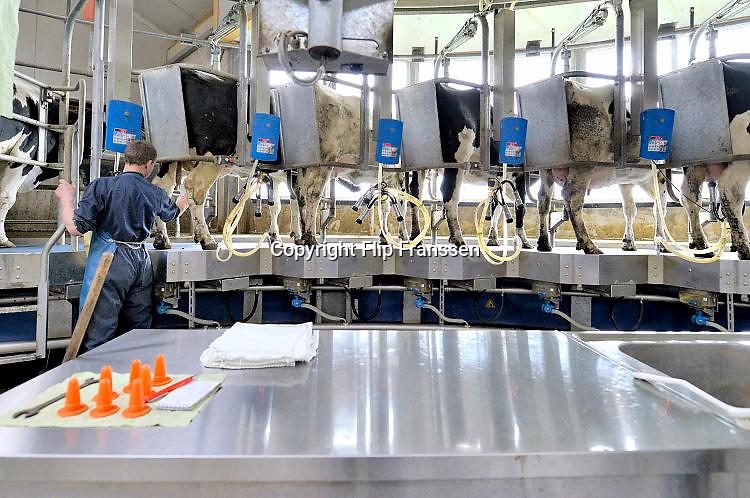 Nederland, The Netherlands, Mook, 2-4-2015 Bij een melkveebedrijf worden de koeien op een moderne manier gemolken. Zij stappen in de carrousel die onderdeel is van de stal, en laten zich in een paar minuten melken. De melkbekers laten automatisch los van de uier als deze leeg is. Deze koeien kunnen ook naar buiten in de wei. Door het loslaten van het europese melkquotum verhogen veel boeren hun melkproductie. Hierdoor is er een overschot ontstaan en moeten veel melkveehouders ermee stoppen. Hiertoe is een uitkoopregeling, subsidie, beschikbaar gesteld door de regering. FOTO: FLIP FRANSSEN