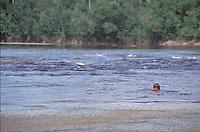 Niño indígena dentro del río Autana, Amazonas, Venezuela.