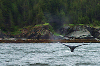 Whale Watching, Auke Bay
