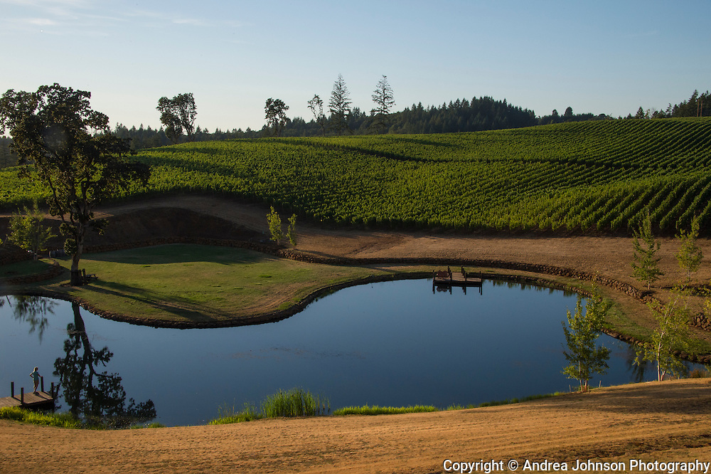 Legacy Estate Vineyard.Eola Hills Vineyards, Eola Hills AVA, Willamette Valley, Oregon