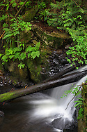 A small waterfall along Steelhead Creek at the Hayward Lake Recreation Area in Mission, British Columbia, Canada