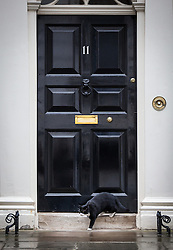 © Licensed to London News Pictures. 02/08/2016. London, UK. Palmerston, the cat belonging to the Foreign and Commonwealth Office, skulks around door to 11 Downing Street. Palmerston and Larry, the Prime Minister's cat, have been seen fighting in recent weeks, and an animal charity has reportedly been called in to arbitrate the dispute. Photo credit: Rob Pinney/LNP