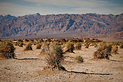 Devils haystacks with the Panamint Mountains at Death Valley National Park, California, USA.