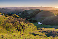 Rolling green hills of the East Bay, from Briones Regional Park, Contra Costa County, California