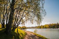 Lush green Djurgården island.