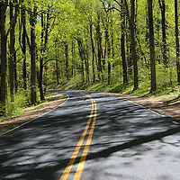"""""""Through Shadow Woods""""<br /> <br /> The beauty of sunlight and shadow through the forests of Shenandoah National Park on Skyline Drive!!<br /> <br /> The Blue Ridge Mountains by Rachel Cohen"""