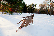 Sugar & Maverick playing in the snow in the Bliss Arboretum