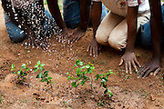 Santa Maria de Itabira_MG, Brasil.<br /> <br /> Atividade de educacao ambiental em comemoracao ao dia da arvore em Santa Maria de Itabira, Minas Gerais.<br /> <br /> Environmental education activities in commemoration of the tree day in Santa Maria de Itabira, Minas Gerais.<br /> <br /> Foto: JOAO MARCOS ROSA / NITRO