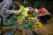 .In the predominately indigenous town of Santiago Sacatepéquez Guatemala on dia de los muertos / dia de los difuntos or Day of the Dead/ All Saints Day. Bamboo kites are made as a way to communicate with the dead, symbolically attracting the spirits to earth. The smell or marigolds, chrysanthemums, daisies and copal incense fill the air as families gather to clean the graves and adorn them with flowers, papel picado and candles..In the predominately indigenous town of Santiago Sacatepéquez Guatemala on dia de los muertos / dia de los difuntos or Day of the Dead/ All Saints Day. Bamboo kites are made as a way to communicate with the dead, symbolically attracting the spirits to earth. The smell or marigolds, chrysanthemums, daisies and copal incense fill the air as families gather to clean the graves and adorn them with flowers, papel picado and candles.