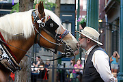 Carriage driver John Lind kisses his horse between rides in downtown Memphis, Tennessee. Scenes from downtown Memphis, Tennessee.