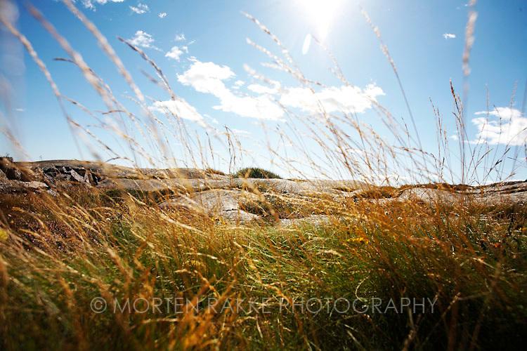 Rakke, Norway. Dry grass, close-up