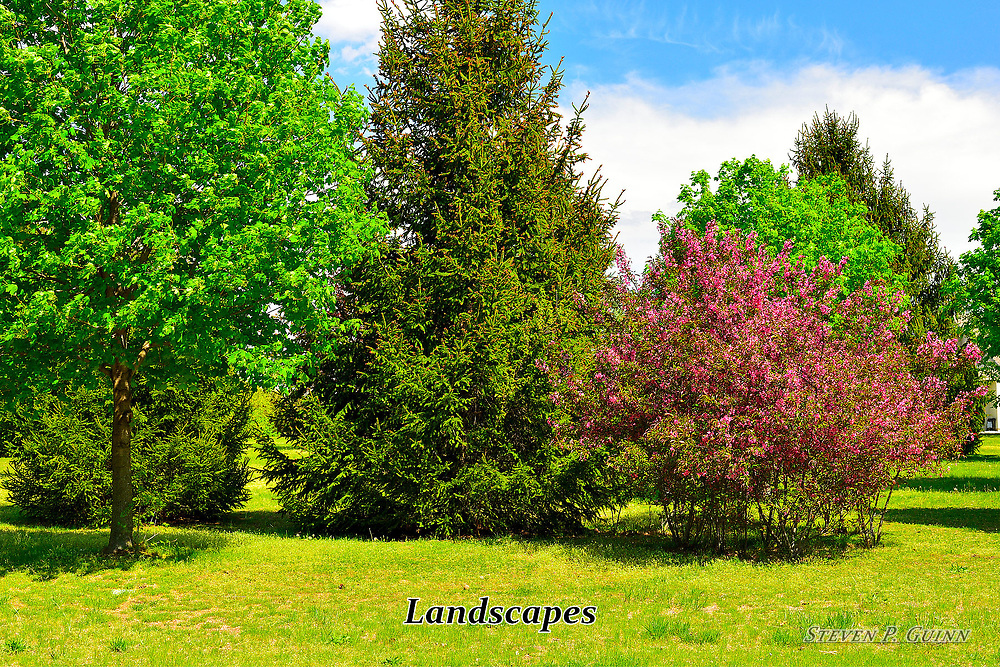 Trees and bushes bloom colorfully on a sunny spring day in rural Indiana.