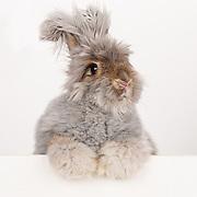 20140906 Bunnyface