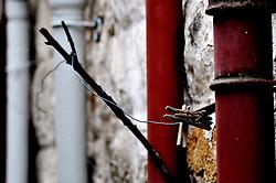 Mollette su filo di ferro