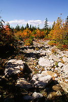 Trees change colors during a recent autumn at The Dolly Sods wilderness, West Virginia. Dolly Sods is on a ridge crest that forms part of the Eastern Continental Divide. Is the highest plateau of its type east of the Mississippi River with altitude ranging from around 4,000 feet to about 2,700 feet.