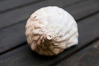 Sea shell on wooden garden table