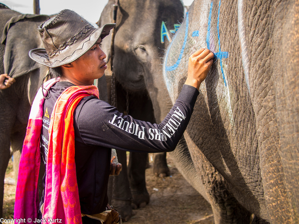 """29 AUGUST 2013 - HUA HIN, PRACHUAP KHIRI KHAN, THAILAND: A mahout (elephant handler) paints his elephant before the King's Cup Elephant Polo Tournament in Hua Hin. The tournament's primary sponsor in Anantara Resorts and the tournament is hosted by Anantara Hua Hin. This is the 12th year for the King's Cup Elephant Polo Tournament. The sport of elephant polo started in Nepal in 1982. Proceeds from the King's Cup tournament goes to help rehabilitate elephants rescued from abuse. Each team has three players and three elephants. Matches take place on a pitch (field) 80 meters by 48 meters using standard polo balls. The game is divided into two 7 minute """"chukkas"""" or halves. There are 16 teams in this year's tournament, including one team of transgendered """"ladyboys.""""    PHOTO BY JACK KURTZ"""