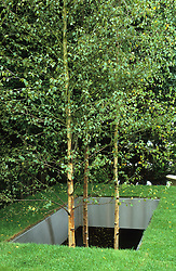 Betula utilis var. jacquemontii ( silver birch ) growing up through 'hole' in lawn faced with stainless steel. Design Diarmuid Gavin