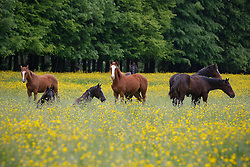 Horses on the meadow<br /> Stal Van Paesschen - Halle 2009<br /> Photo © Dirk Caremans