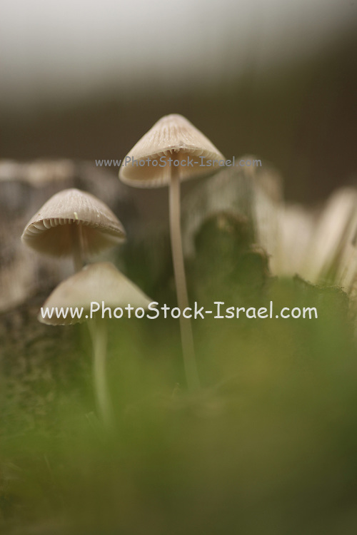 Mushrooms, photographed in Zamosc, Poland in October