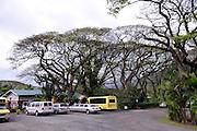 Coffee plantation. Oahu, Hawaii