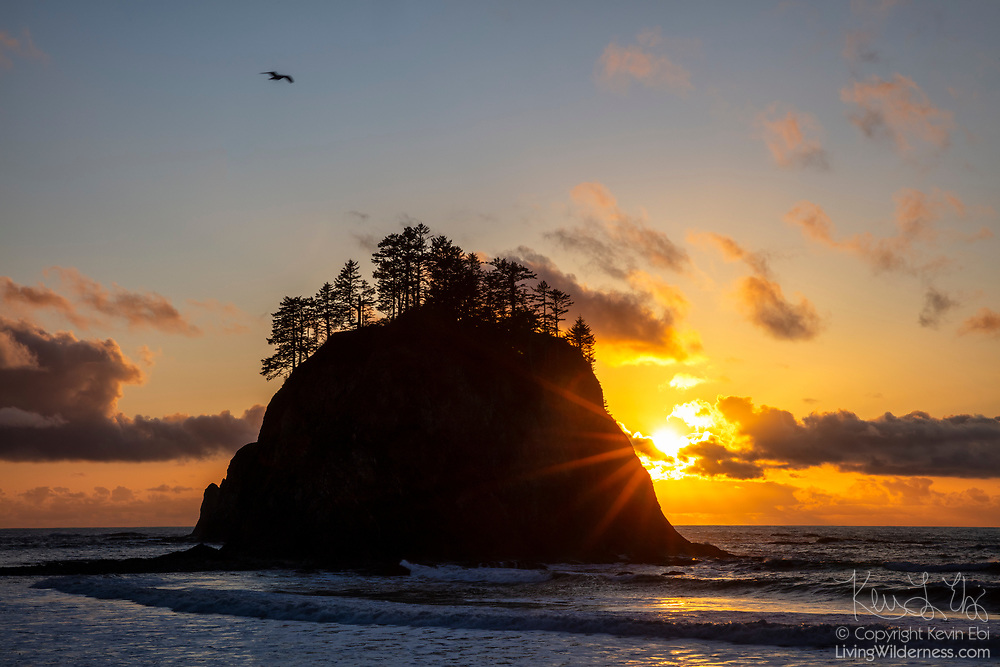A gull flies over as the sun begins to set behind Little James Island in Olympic National Park, Washington.