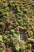 Vine covered window of winery in Napa Valley, California