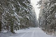 Small forest road in spruce (Picea abies) forest on snowy winter day, Kemeri National Park (Ķemeru Nacionālais parks), Latvia Ⓒ Davis Ulands | davisulands.com