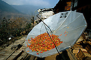 Above the municipal market in Bhutan, a shopkeeper's TV satellite dish doubles as a dehydration rack for red chili peppers. Hungry Planet: What the World Eats (p. 41). This image is featured alongside the Namgay family images in Hungry Planet: What the World Eats.