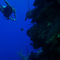 Hunting Lionfish, Grand Cayman