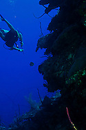 Hunting Lionfish, Grand Cayman