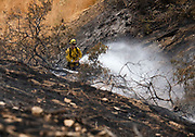 Firefighters put out a hotspot on a brushfire, Sunday, Sept. 3, 2017, in Burbank, Calif. Several hundred firefighters worked to contain a blaze that chewed through brush-covered mountains, prompting evacuation orders for homes in Los Angeles, Burbank and Glendale.(Photo by Ringo Chiu)<br /> <br /> Usage Notes: This content is intended for editorial use only. For other uses, additional clearances may be required.