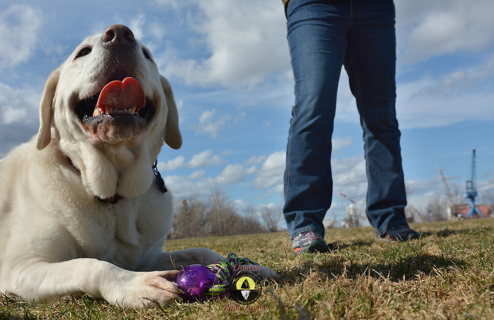 """BATH, Maine --  Ellen Jones, right, of Bath, holds up a ball for her dog, Rolley, a 6-year old White Labrador Retriever, at the Bath Dog Park on Friday. Jones and Rolley are regular visitors, """" we come about once a week,"""" she said.  They both love the park. Photo by Roger S. Duncan for The Forecaster."""