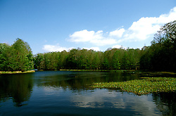 Florida: Withlacoochee River, Citrus County.  Photo: flcitr104.Photo copyright Lee Foster, 510/549-2202, lee@fostertravel.com, www.fostertravel.com