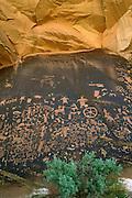 Newspaper Rock petroglyph panel, Utah