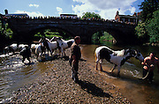 Onlookers watch from the bridge as piebald gypsy horse are washed in the river before being sold at Appleby fair. Romany Gypsies at Appleby Fair, Cumbria. The most important annual Gypsy horse fair whre Romany Gypsies and travelers meet to trade their wares...English Romany Gypsies traditionally traveled the country roads camping nearby towns and villages, choosing the grassy roadside banks, where they tethered their horses, or in farmer's fields, when they were allowed. Travelling in bowtop wagons drawn by horses, and before that with tents, sometimes with horse drawn carts or just by foot. Often they worked as casual agricultural labourers, doing the seasons work. They also could earn their living in different ways, sometimes selling their wares, brass, tin, wood and cloth, such as embroidered cloths or lace, telling fortunes, music and dancing, and through crafts skills in basket making, plaiting chair bases, sharpening knives,  They would make fires from old wood, cleaning up after them when they moved on. There were several horse fairs, notably Appleby in Cumbria and Stow-on-Wold in the Cotswolds where they trade and sell horses, some traditions which keep to this day.