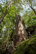 rock pillar of the Stenzelberg mountain in the Siebengebirge hill range near Koenigswinter, the mountain served as a quarry for quartz latite until the 1930s, North Rhine-Westphalia, Germany.<br /> <br /> Felssaeule des Stenzelberg im Siebengebirge bei Koenigswinter, der Berg diente bis in die 1930er Jahre als Steinbruch fuer Quarz-Latit, Nordrhein-Westfalen, Deutschland.