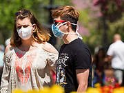 """03 MAY 2020 - PELLA, IOWA: People wearing masks to prevent the spread of Coronavirus walk through downtown Pella, Iowa. Pella is a small community in central Iowa. The town's economy is driven by tourism and the Tulip Festival, the largest tourist event of the year, has already by canceled for 2020 because of fears that the festival could become a COVID-19 (Coronavirus/SARS-CoV-2) """"Super Spreader"""". The Governor of Iowa reopened 77 of Iowa's 99 counties. The counties that were reopened have reported low incidences of Coronavirus. Marion County, where Pella is located, has reported 12 cases of Coronavirus. There have been 9,169 confirmed cases of Coronavirus in Iowa, including 1,476 cases in the Des Moines area, less than one hour away. Many people from Des Moines drove to Pella this weekend to see the tulips for which the town is famous.      PHOTO BY JACK KURTZ"""