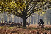 Richmond Park Cyclists