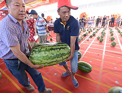 June 27, 2017 - Kaifeng, Kaifeng, China - Kaifeng, CHINA-June 27 2017: (EDITORIAL USE ONLY. CHINA OUT) ..A watermelon contest is held during the 2nd Watermelon Festival in Kaifeng, central China's Henan Province, June 27th, 2017, selecting the sweetest and biggest watermelon. (Credit Image: © SIPA Asia via ZUMA Wire)
