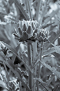 FINE ART PHOTOGRAPHY by Tim Graham<br />