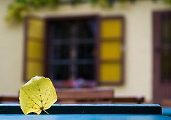 THEMENBILD - Herbst in Wien. Aufgenommen am 05.10.2016 in Wien, Österreich // Autumn in Vienna, Austria on 2016/10/05. EXPA Pictures © 2016, PhotoCredit: EXPA/ Michael Gruber