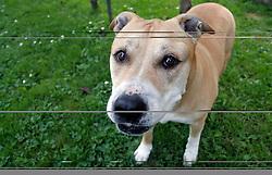 Dog. (Photo by Vid Ponikvar / Sportal Images)