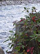Tree stump with creek