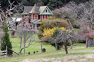 Alfred Ruckle's Queen Anne style farmhouse built in 1906 on the farmland now a part of Ruckle Provincial Park on Salt Spring Island, British Columbia, Canada.  The Ruckle Farm has been in continuous use as farmland since Henry Ruckle began farming there in 1872.  Photographed from Beaver Point Road next to the park headquarters building.