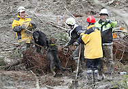 Rescue workers search for victims with rescue dogs growling at each other at the mudslide in Oso, Washington March 30, 2014. Local churches offered prayers on Sunday for the victims of last week's devastating mudslide in Washington state and words of solace for grieving families and friends, many of whom are still waiting for news of missing loved ones.  REUTERS/Rick Wilking (UNITED STATES)