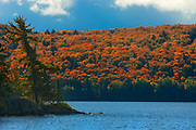 Hill covered in autumn foliage at Lake of Two Rivers <br /> Algonquin Provincial Park<br /> Ontario<br /> Canada